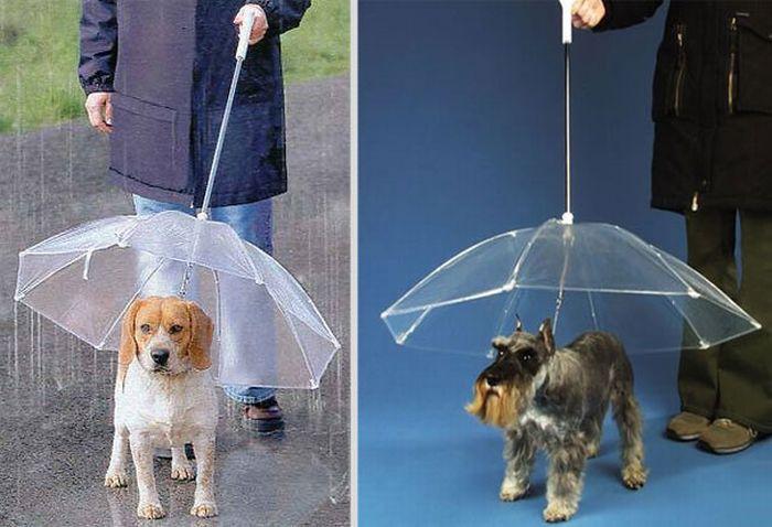Креативные зонты (29 фото)