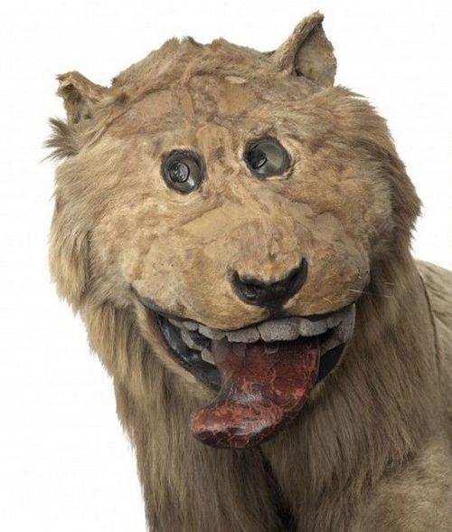 Лев для короля (3 фото)
