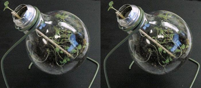 Креатив из обычных лампочек (27 фото)