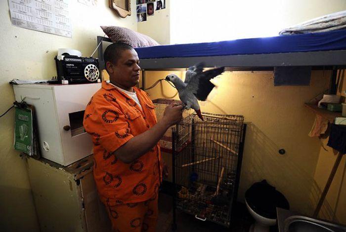 Заключенные и попугаи (16 фото)