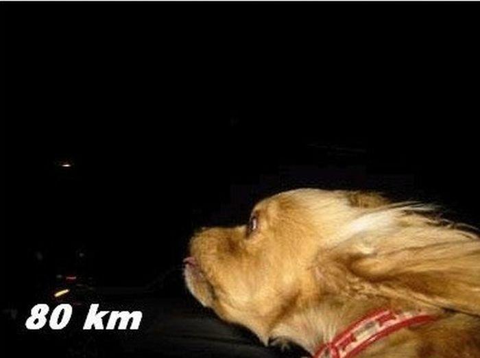 Собака и ветер (10 фото)