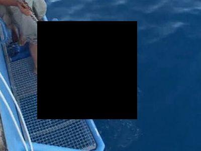 Стая акул-людоедов в Приморье (фото)