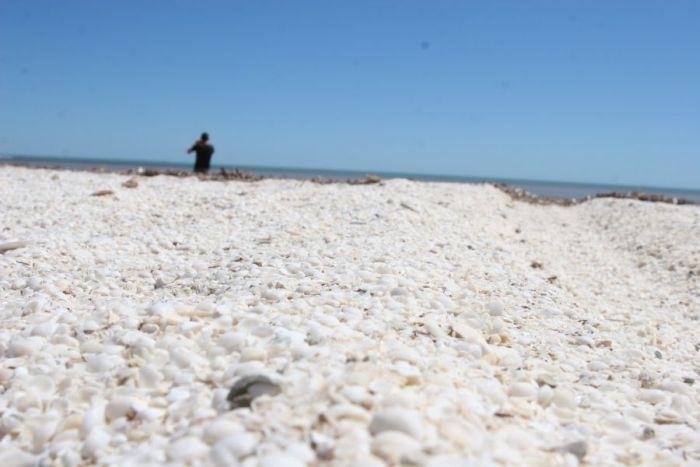 Пляж из ракушек (7 фото)