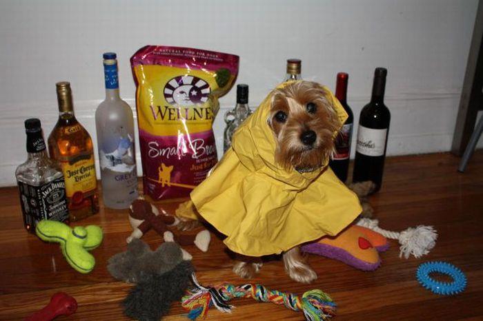 Забавная подготовка к встрече с ураганом (22 фото)