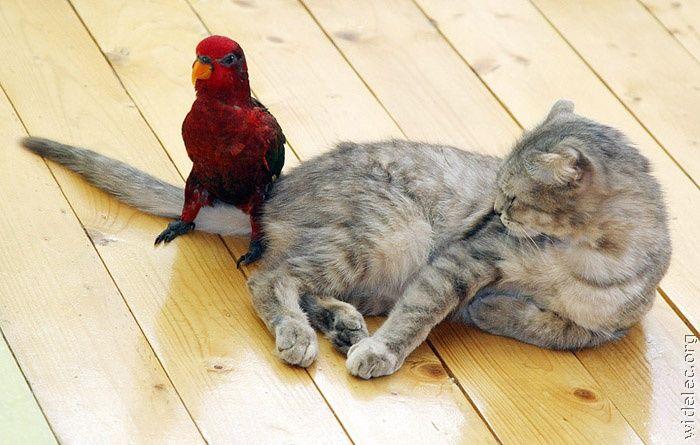 http://de.trinixy.ru/pics4/20110831/animals_friendship_10.jpg