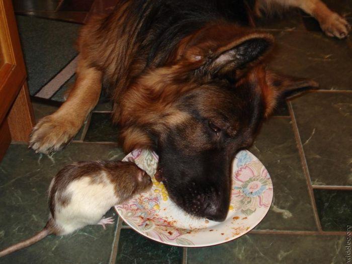http://de.trinixy.ru/pics4/20110831/animals_friendship_11.jpg