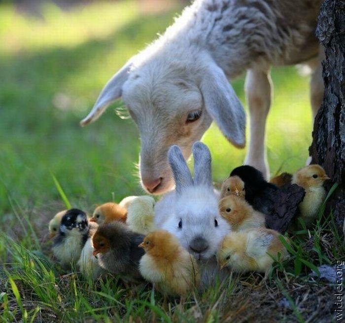 http://de.trinixy.ru/pics4/20110831/animals_friendship_13.jpg