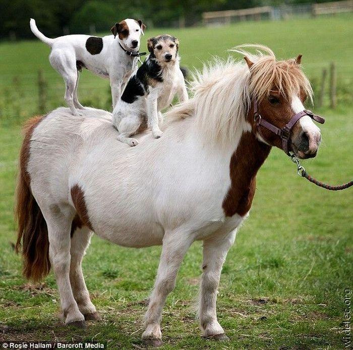 http://de.trinixy.ru/pics4/20110831/animals_friendship_17.jpg