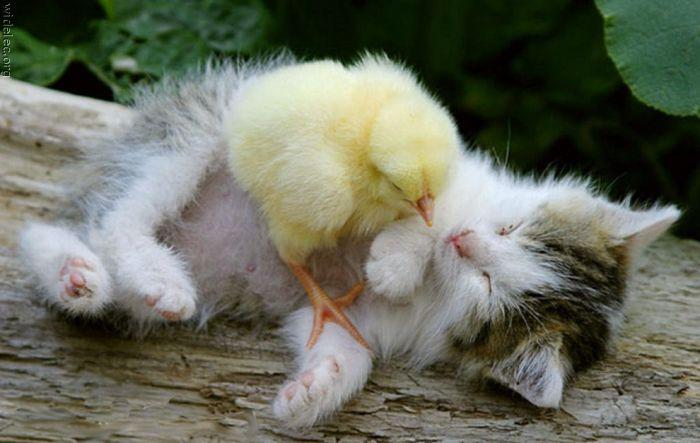 http://de.trinixy.ru/pics4/20110831/animals_friendship_21.jpg