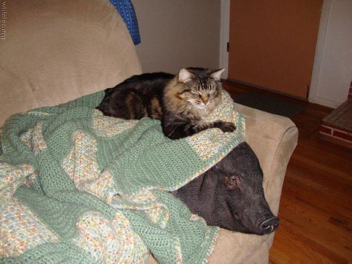 http://de.trinixy.ru/pics4/20110831/animals_friendship_26.jpg
