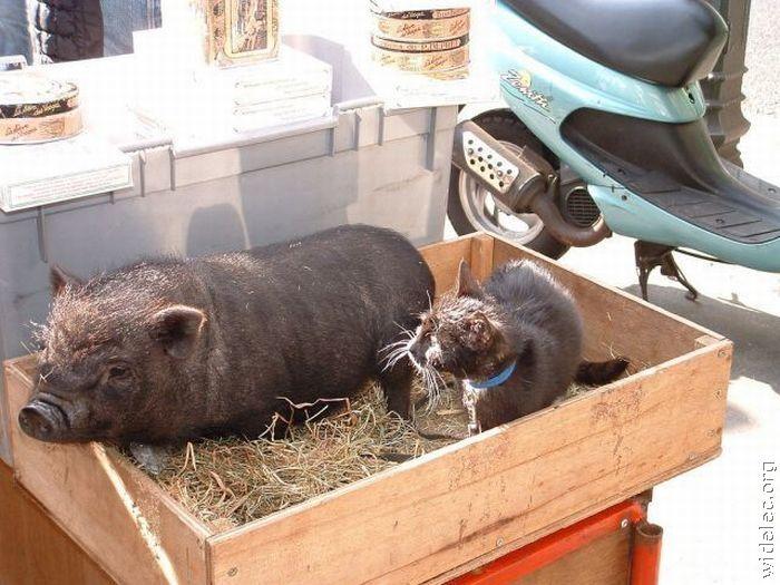 http://de.trinixy.ru/pics4/20110831/animals_friendship_29.jpg
