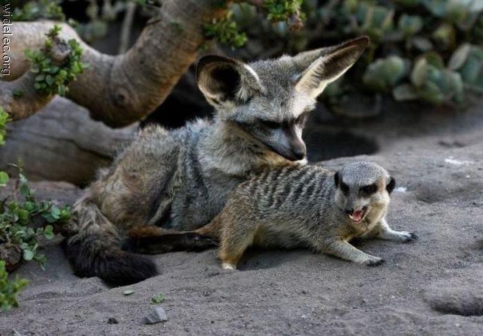 http://de.trinixy.ru/pics4/20110831/animals_friendship_30.jpg