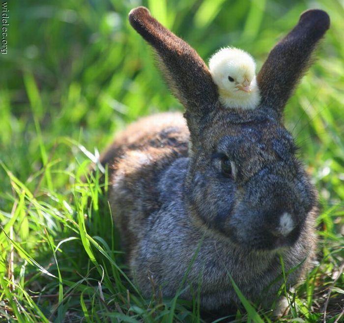 http://de.trinixy.ru/pics4/20110831/animals_friendship_34.jpg