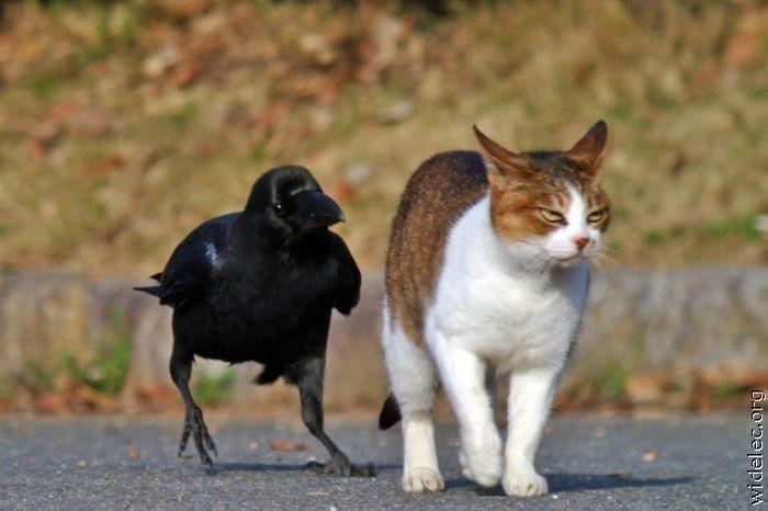 http://de.trinixy.ru/pics4/20110831/animals_friendship_37.jpg