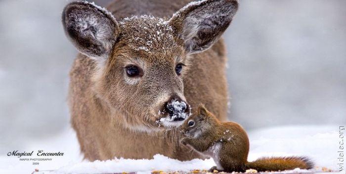 http://de.trinixy.ru/pics4/20110831/animals_friendship_49.jpg