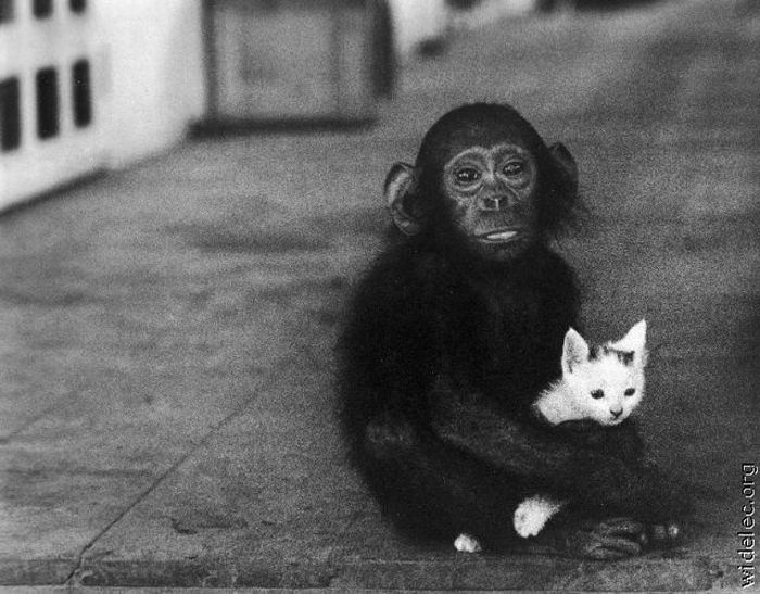 Милая дружба животных (110 фото)