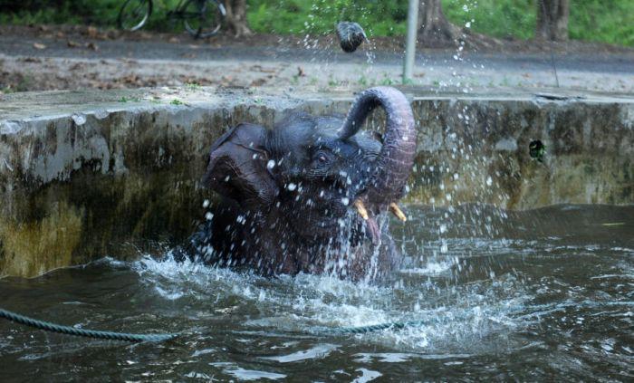 Спасательная операция слоненка (6 фото)