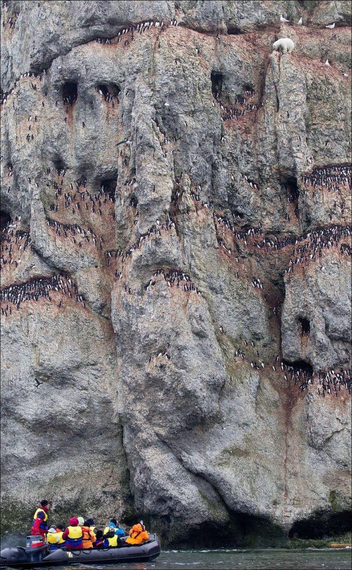 Медведь - покоритель вершин (6 фото)