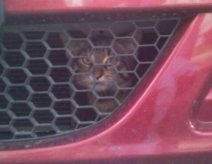 Найдите кота (3 фото)