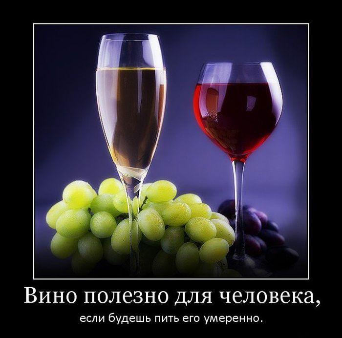 Демотиваторы про алкоголь (15 фото)