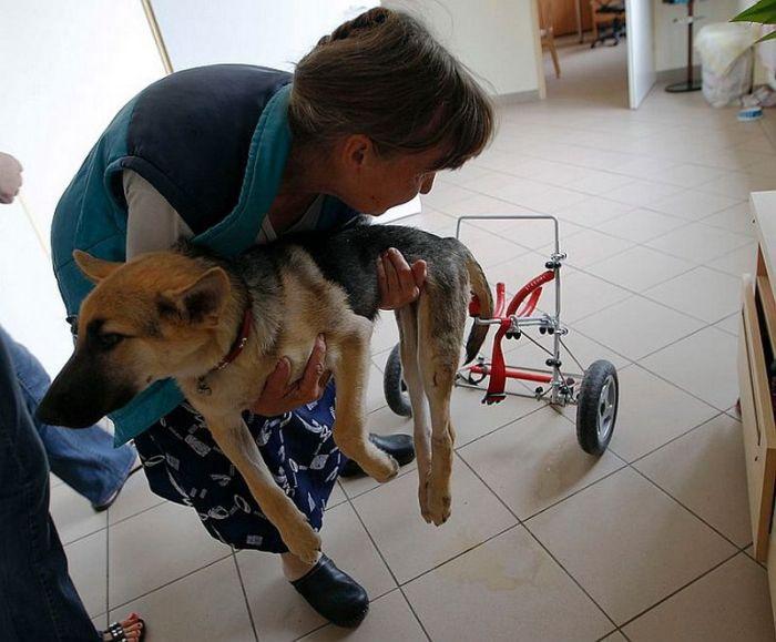Спасенный щенок (7 фото)