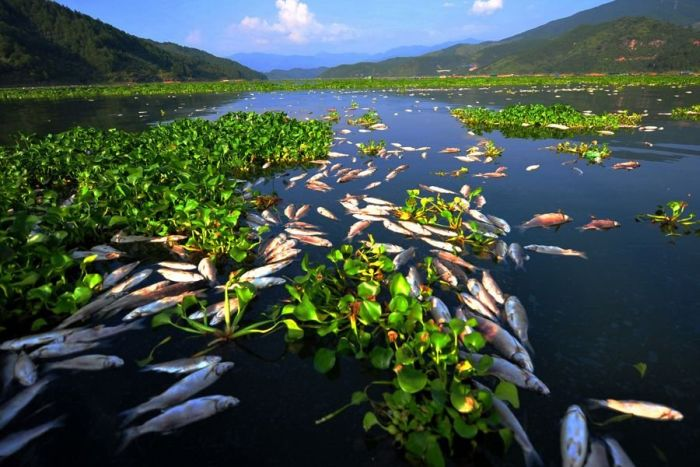 В Китае вымирает рыба (7 фото)