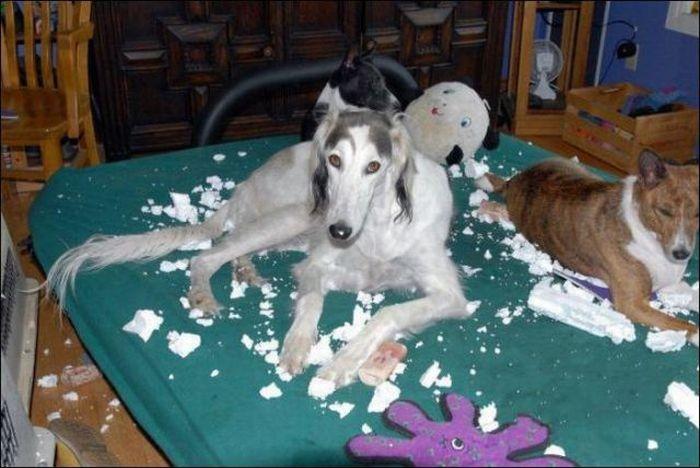 Собаки-проказницы (35 фото)