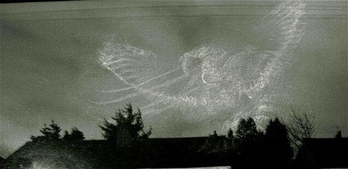 Следы птиц (12 фото)