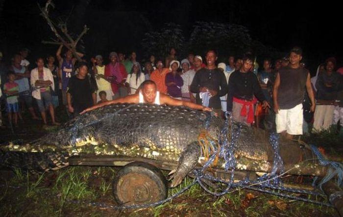 Огромный крокодил (7 фото + видео)