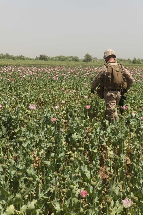 Цветы грез Афганистана (38 фото)