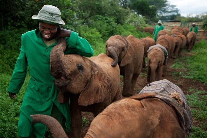 Детский домдляслонов вКении (18 фото)