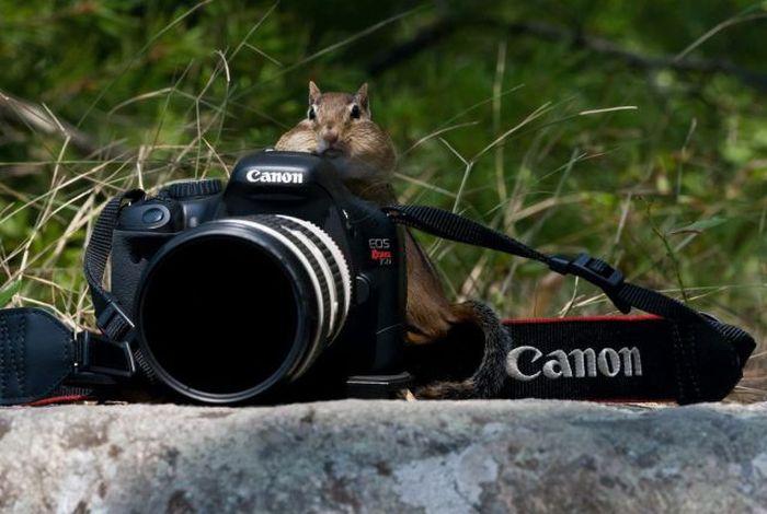 Прикольные картинки (126 фото)