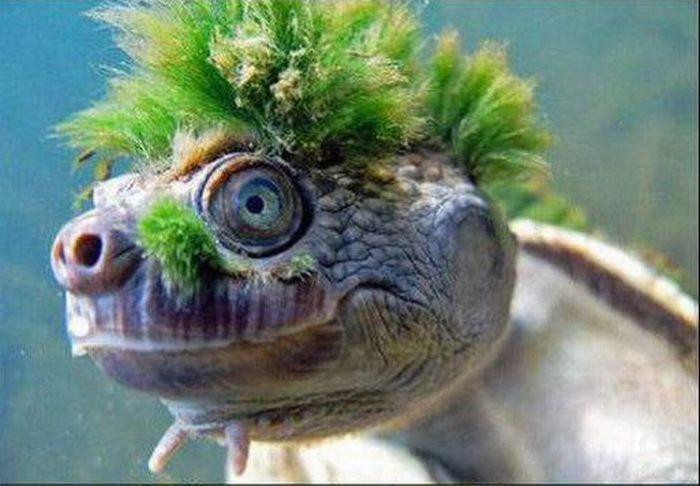 Странная черепашка (12 фото)