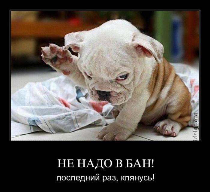 http://trinixy.ru/pics4/20110912/demotivatory_22.jpg