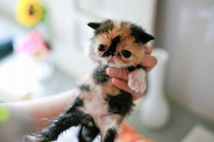 Славный котенок (16 фото)