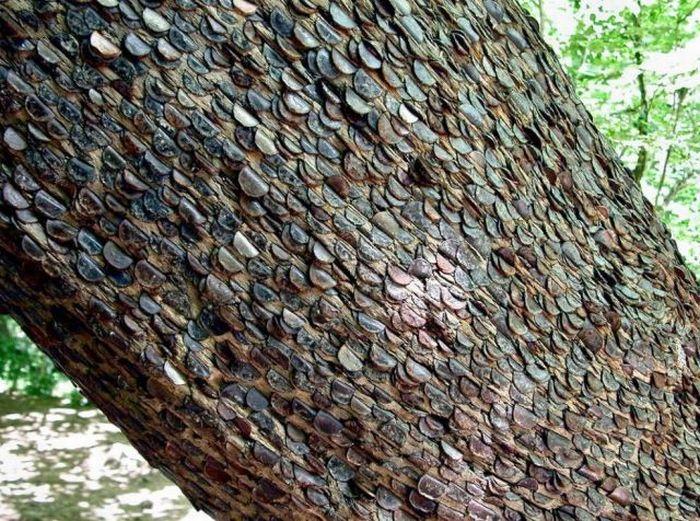 Денежное дерево в Великобритании (12 фото)