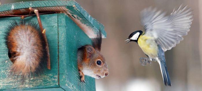 Милые создания - белки (100 фото)