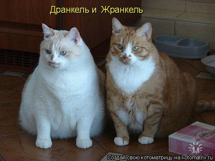 http://de.trinixy.ru/pics4/20110916/kotomatrix_02.jpg
