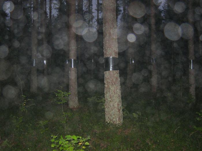 Лесной розыгрыш (7 фото)