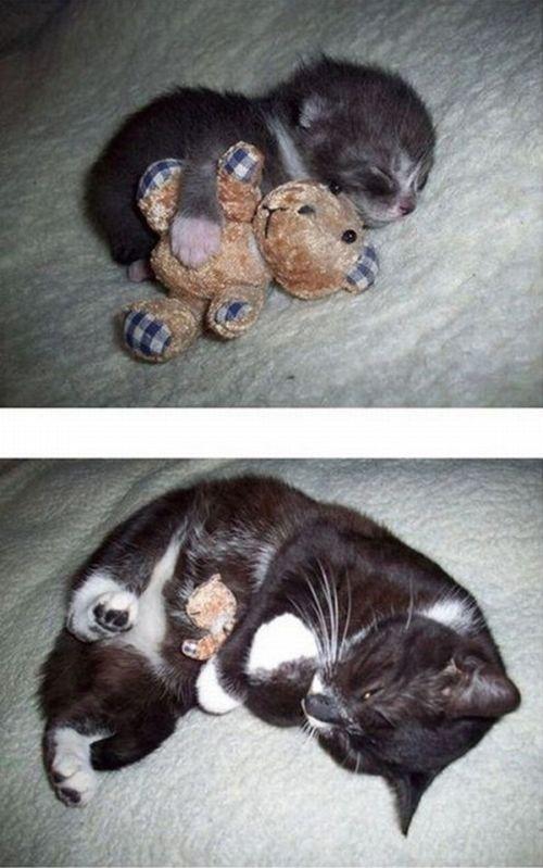 Котята взрослеют (15 фото)
