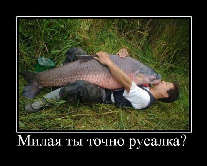 Изображение стороннего сайта - http://trinixy.ru/pics4/20110921/demotivatory_11.jpg