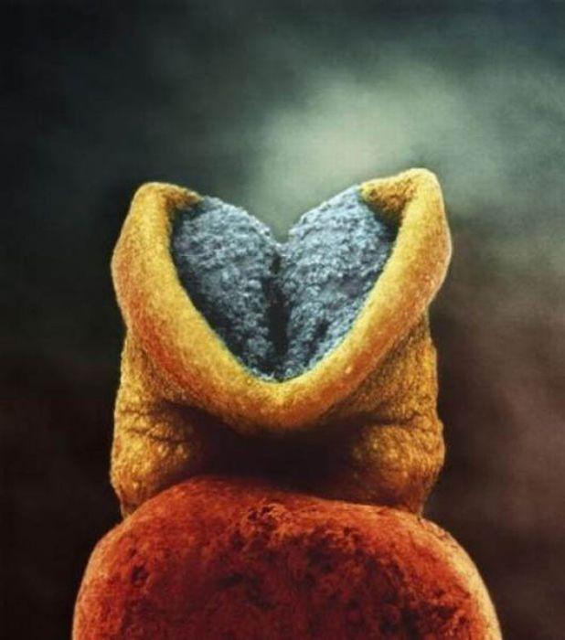 Как развивается плод (25 фото)