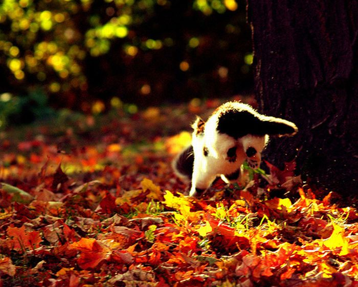 Коты и осень (20 фото)