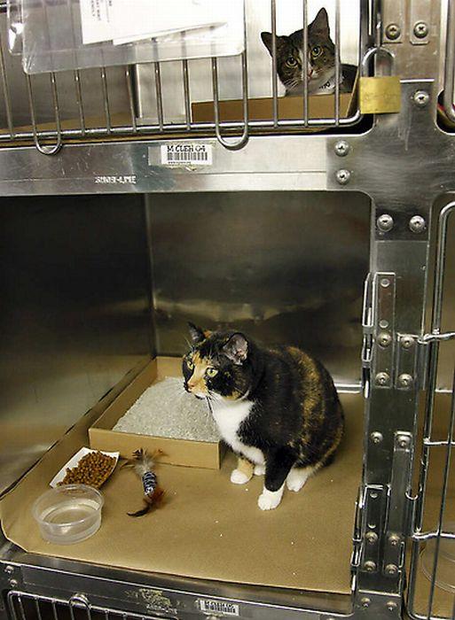 Кошка-путешественница (12 фото)