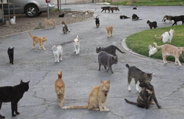 Кошкин дом (8 фото)