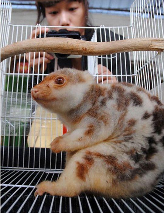 Неизвестный зверек из Китая (3 фото)