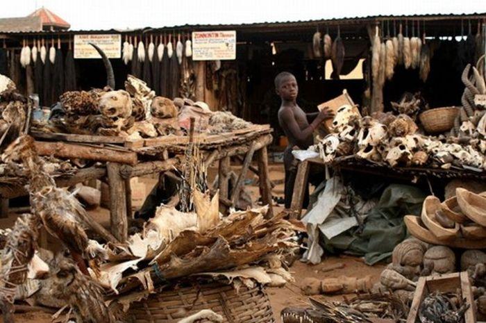 Супермаркет Вуду в Того (7 фото)