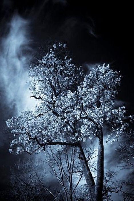 Страшные деревья (30 фото)