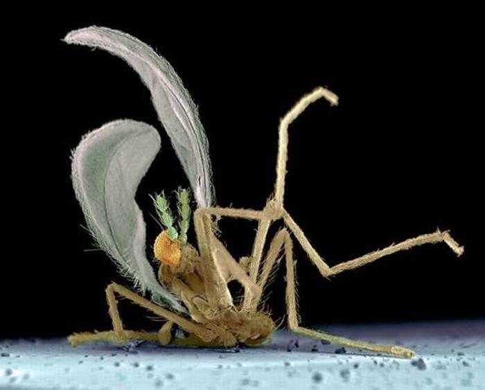 Макро-фотографии прихлопнутых насекомых (7 фото)