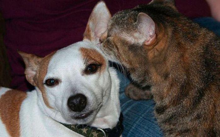 Настоящей дружбе нет предела. Подборка самых лучших и трогательных